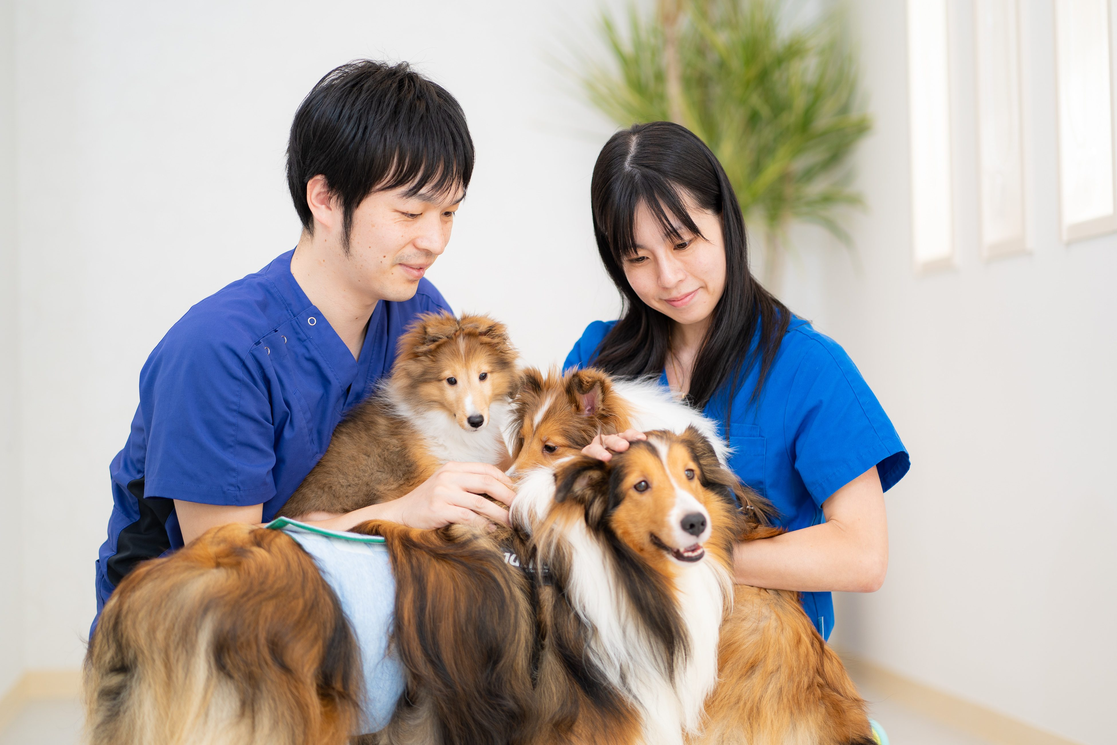 仙台で動物病院のホームページ作成
